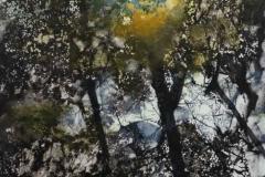 trees-5